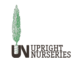 Upright Nurseries